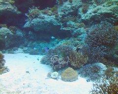 美ら海水族館・サンゴの海2.jpg