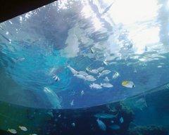 美ら海水族館・熱帯魚の海.jpg