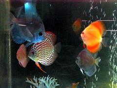 ノシャップ岬・水族館・熱帯魚.jpg