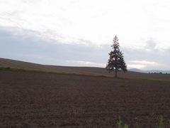 パノラマロード・クリスマスツリーの木1.jpg