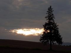 パノラマロード・クリスマスツリーの木2.jpg
