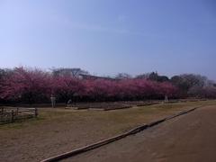 佐倉城/自由広場.jpg