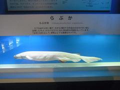 東海大学海洋科学博物館/水族館部門/らぶか.jpg
