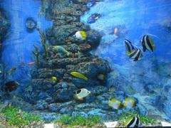 東海大学海洋科学博物館/水族館部門/チョウチョウウオなど.jpg