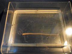 東海大学海洋科学博物館/水族館部門/リュウグウノツカイ稚魚.jpg