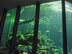 東海大学海洋科学博物館/水族館部門/海洋水槽.jpg