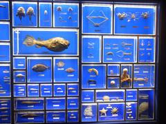 東海大学海洋科学博物館/水族館部門/深海生物.jpg