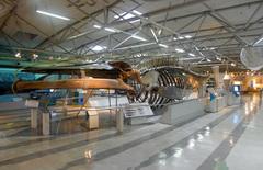 東海大学海洋科学博物館/科学博物館部門/全景.jpg