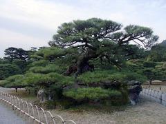 栗林公園・鶴亀松.jpg