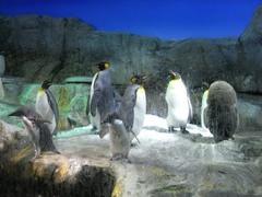 海遊館・ペンギン.jpg
