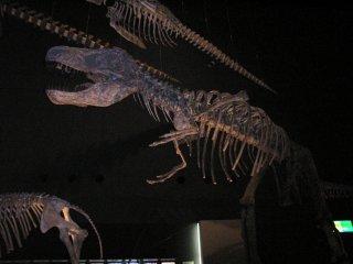 地球博物館恐竜骨格.jpg